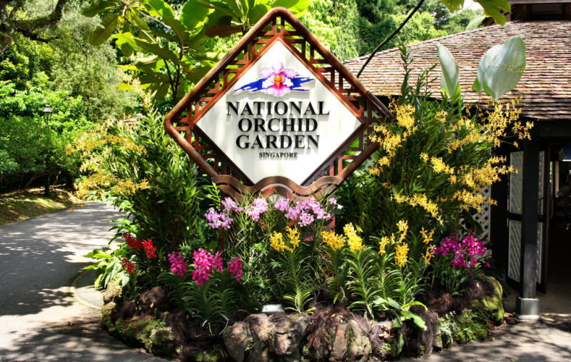 BLOG_ SING national orchid garden